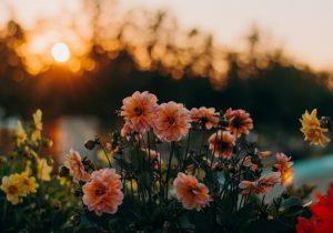 create a calm evening routine