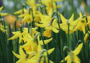 Things To Do In March to Simplify Organise And Enjoy Life